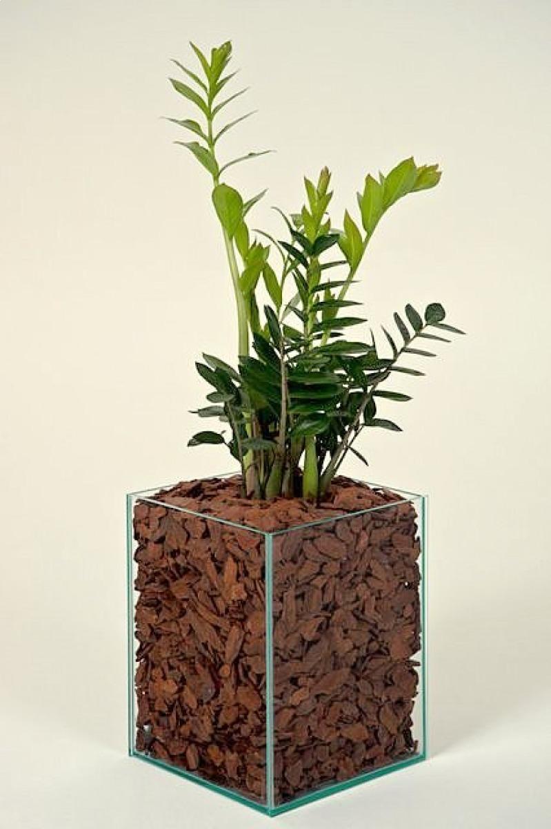 Plantas Ornamentais Para Escrit U00f3rio Ou Casa
