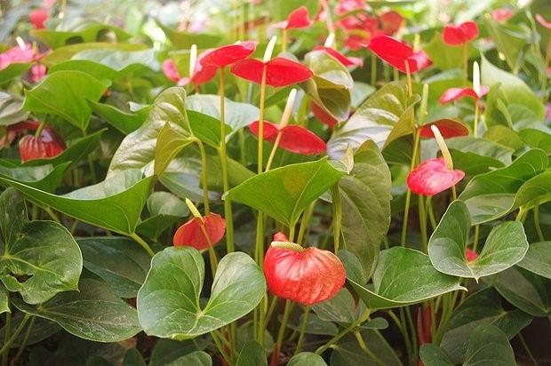 Plantas ornamentales s 5 00 en mercado libre for Plantas ornamentales helechos