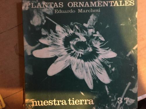 plantas ornamentales, e marchesi,  nuestra tierra 37