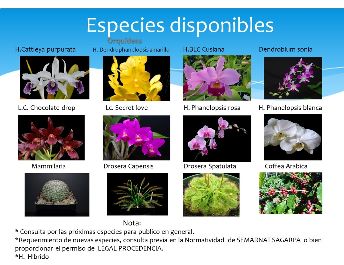 Plantas ornamentales orquideas cactus insectivoras in for 20 plantas ornamentales