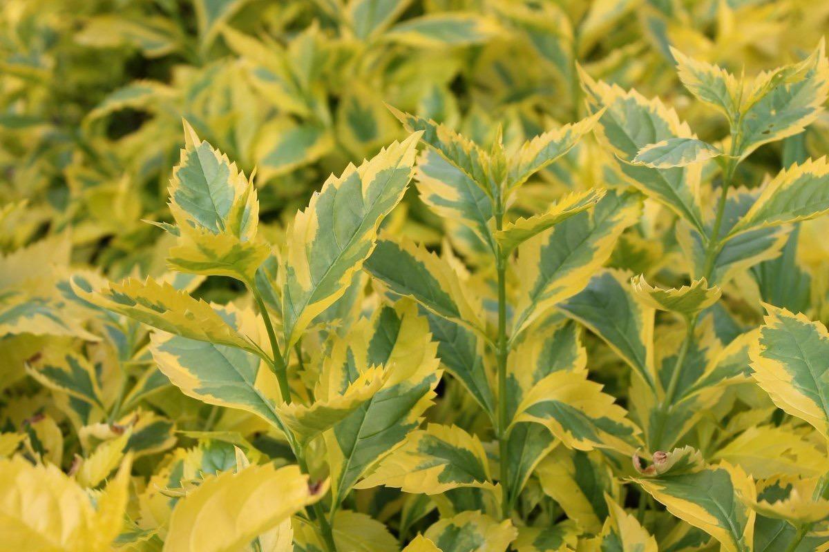 Plantas ornamentales para jardiner a interior y exterior en mercado libre - Plantas de jardin exterior ...