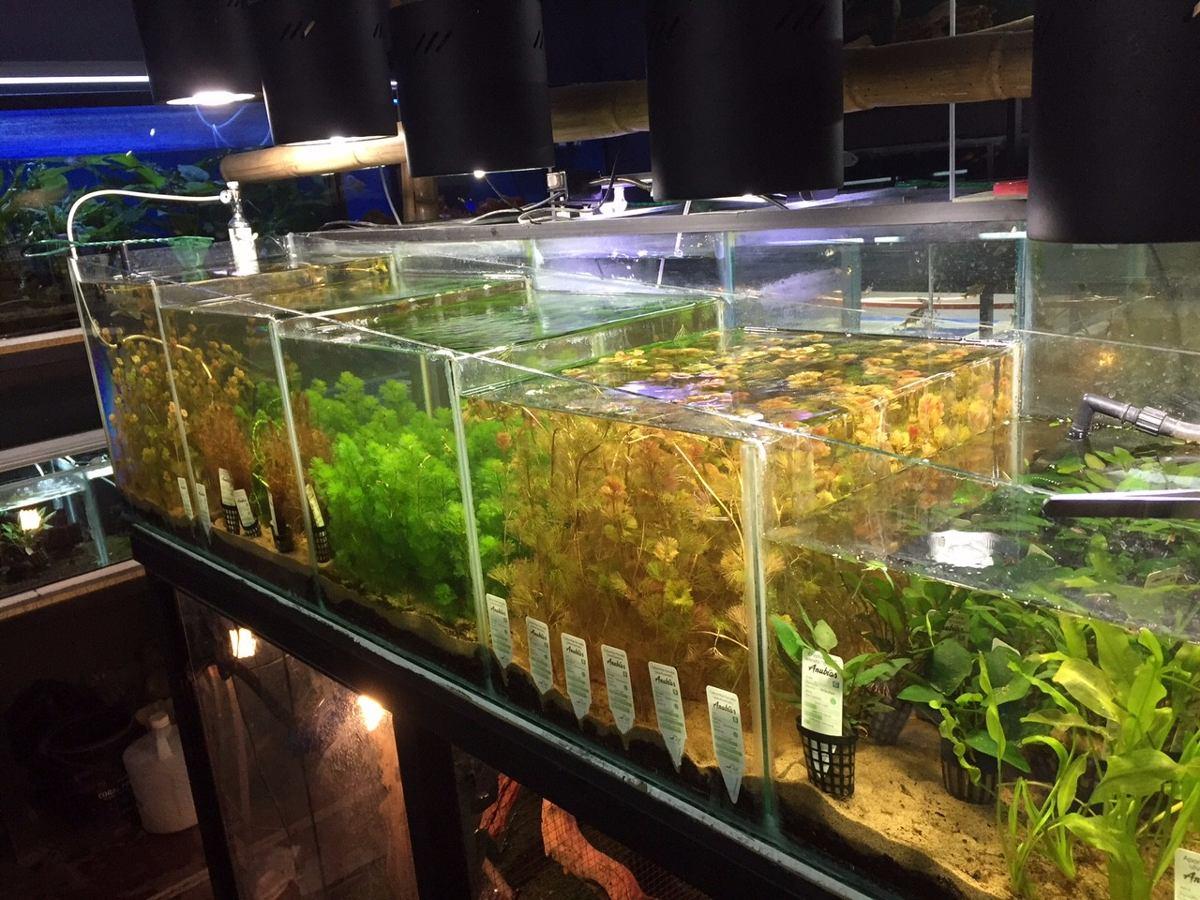 Plantas para acuarios importadas libres de plagas 1 for Todo para acuarios