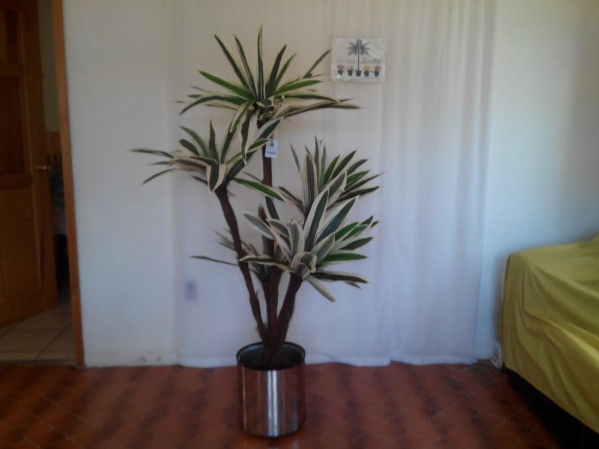 Plantas para decorar oficinas y negocios maa 3 for Plantas decorativas para oficina