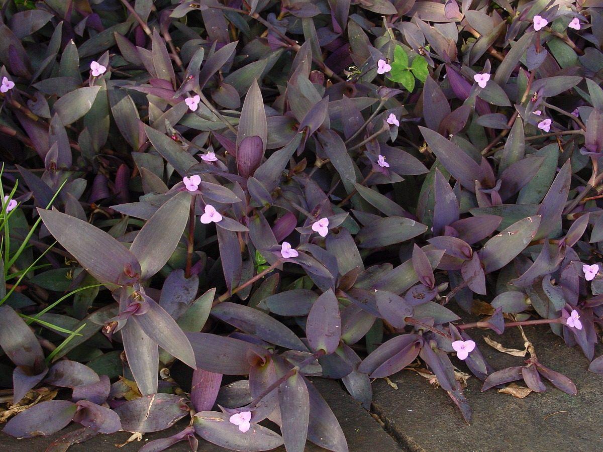 plantas para jardines verticales sol y sombra