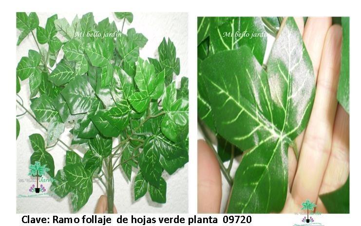 Plantas para macetas tipo follaje bvf en for Tipos de plantas para macetas