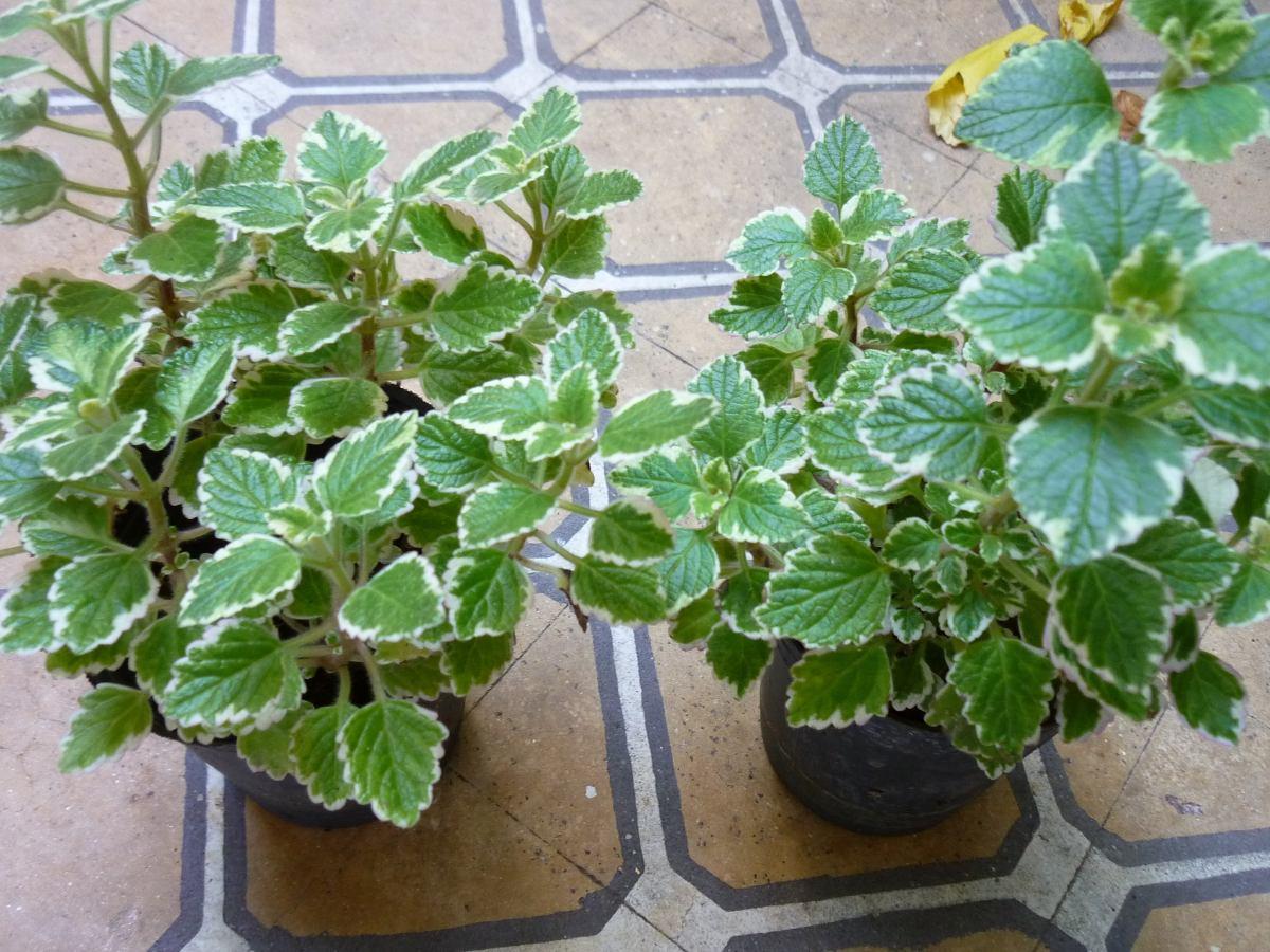 Plantas resistentes al sol good plantas resistentes ao - Plantas muy resistentes al sol ...