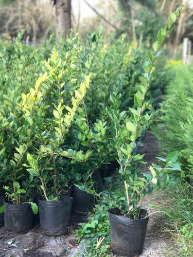 plantas somos productores