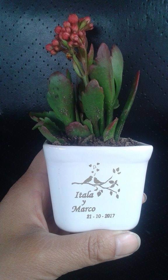 Plantas Suculentas Cactus Macetas Matrimonio Shower Bautizo - S/ 6 ...