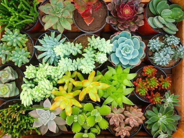 plantas suculentas crasas precio outlet en santiago