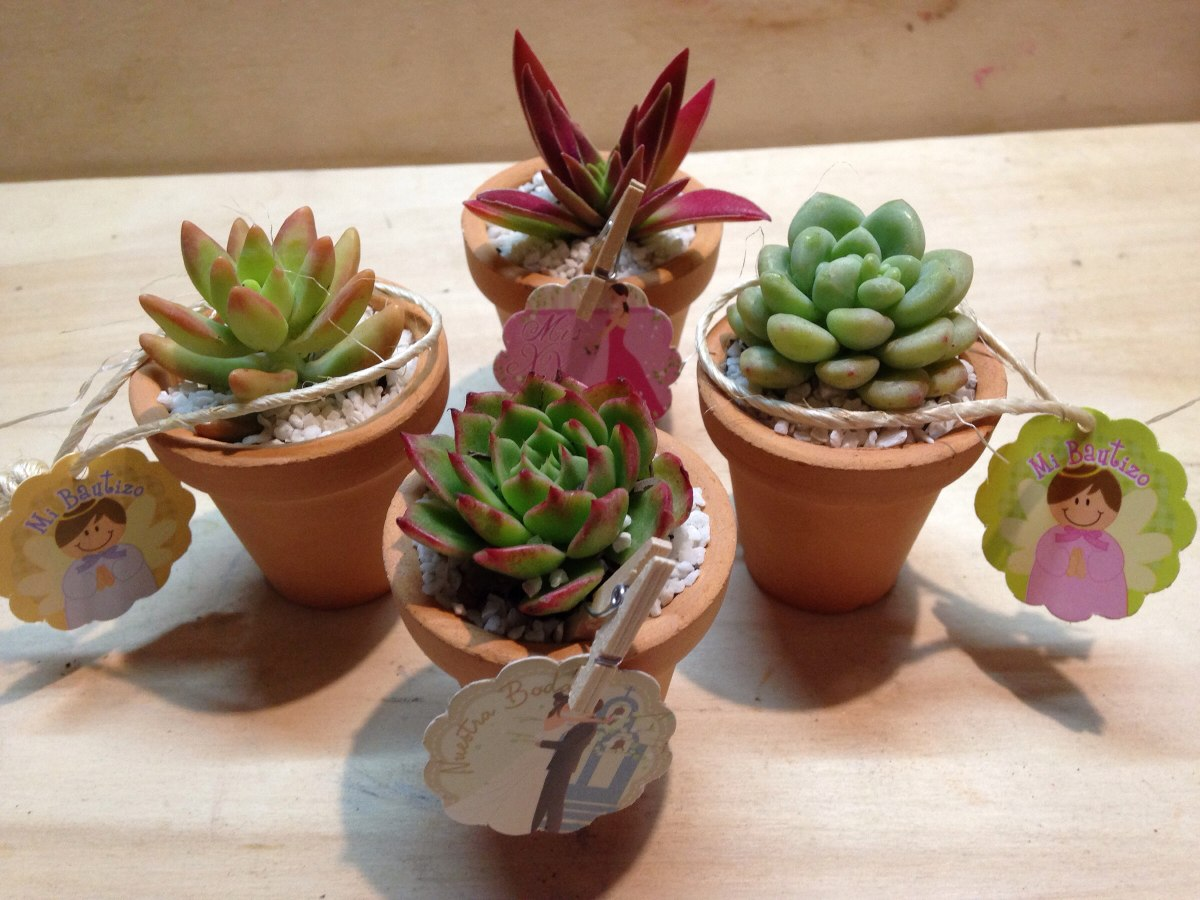 Plantas suculentas miniatura en maceta de barro for Macetas miniatura