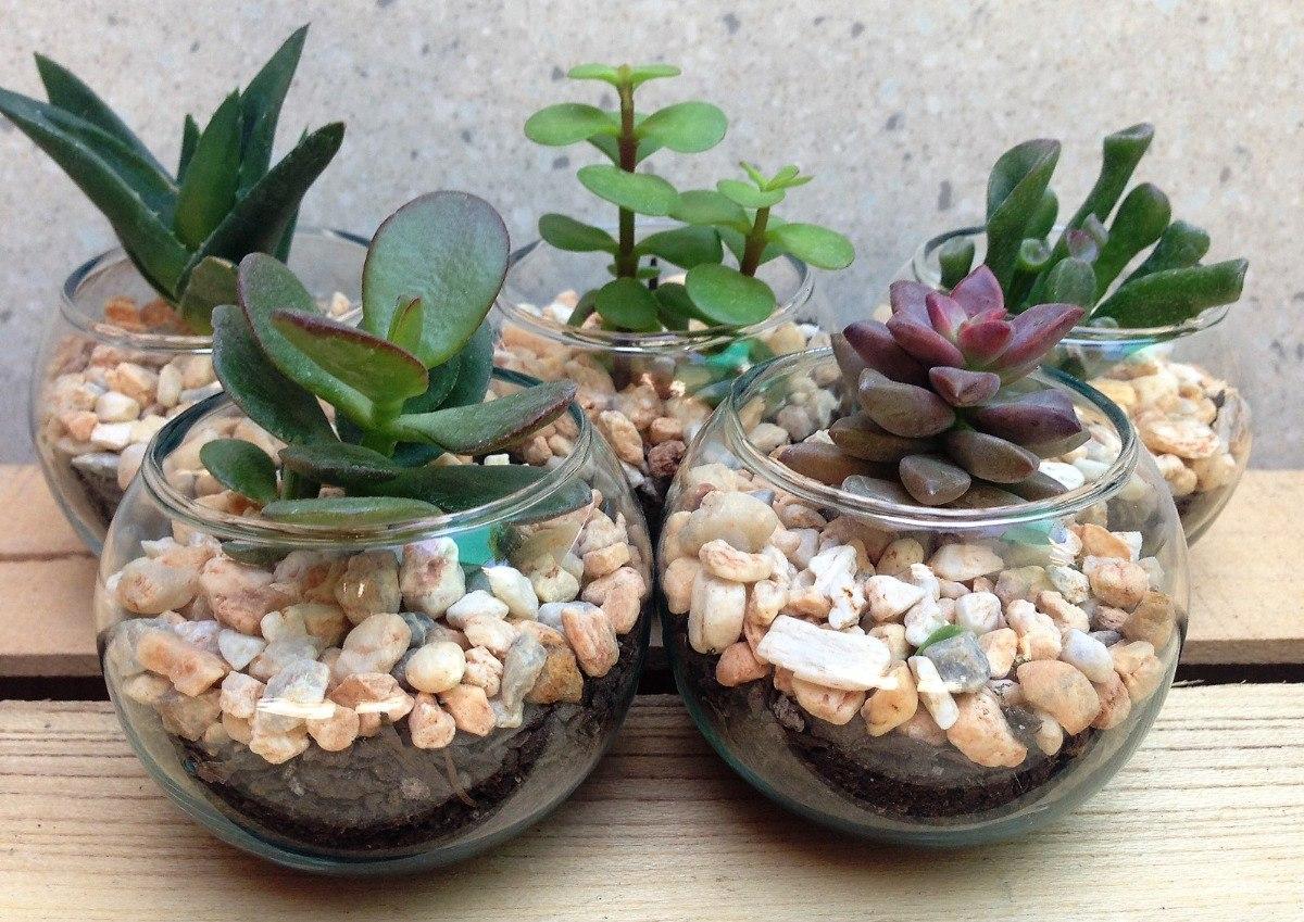 Ver fotos de plantas suculentas 26