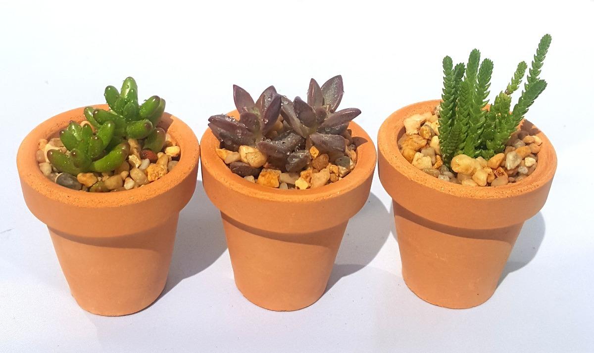 Plantas suculentas y cactus miniatura en maceta de for Cactus y suculentas