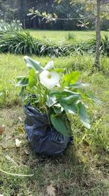 Planta Tronadora Jardinería Usado En Mercado Libre Uruguay