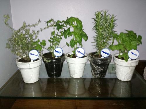 plantines de huerta gran variedad naddeo´s il mercato