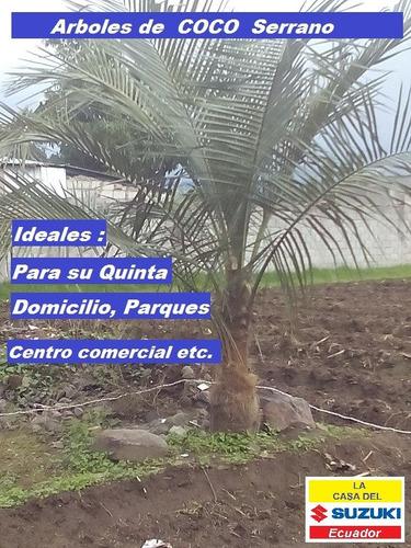 plantitas de coco