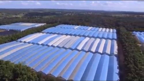 plástico azul para estufas-importado- 120mic-m²
