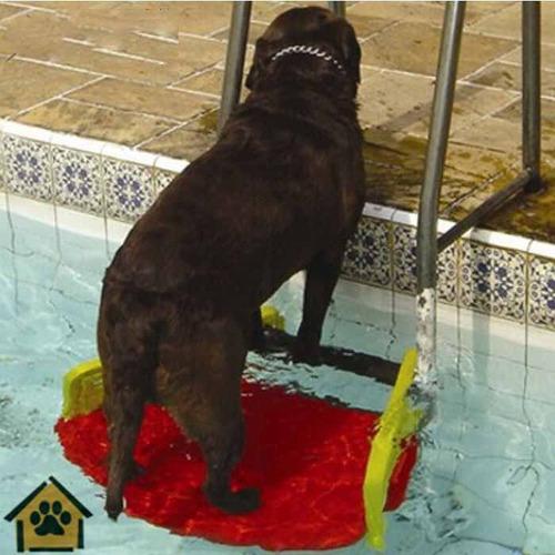 plataforma piscina para cães gatos save dog anti-afogamento