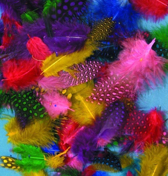 Plumas De Colores De Ginea 25 Plumas De 3 A 8 Cm - $ 45,00 en ...