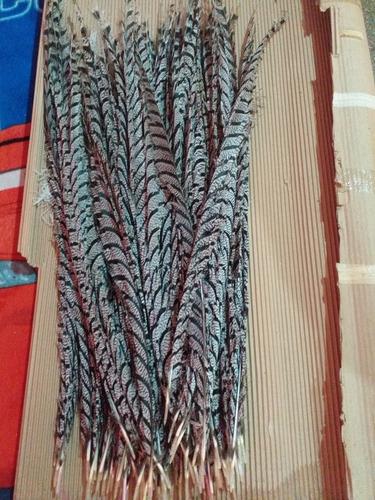 plumas de faisán