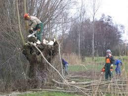 poda de altura retiro de ramas raices arboles maleza cesped