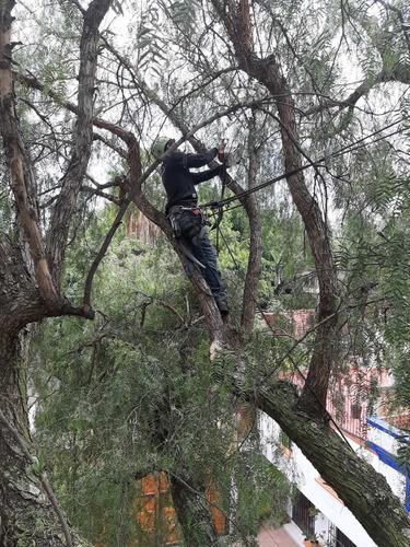 poda de árboles