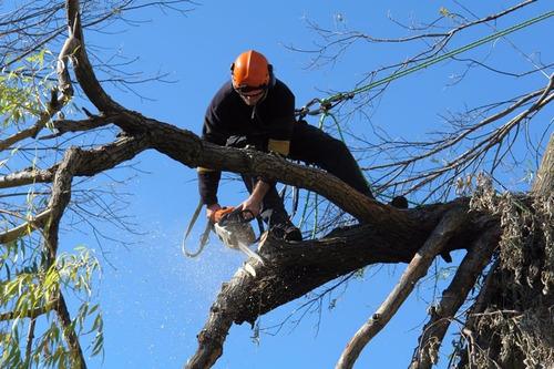 poda de arboles, extracción de raíz, poda alto riesgo altura