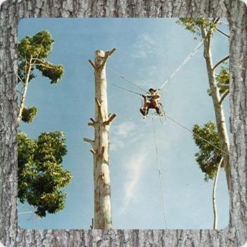 poda de árboles, palmeras y trepadoras.
