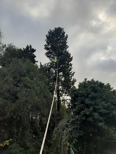 poda de árboles. poda de árboles en altura extracciones.