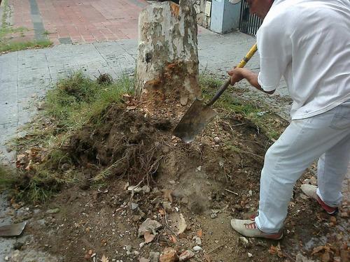 poda de arboles y limpieza de terrenos con desmalezadora