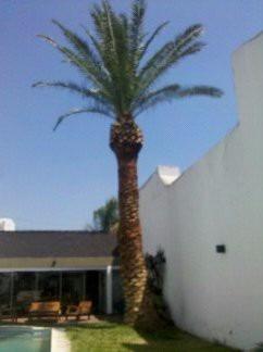 poda de arboles y palmeras. mucha experiencia. zona sur caba