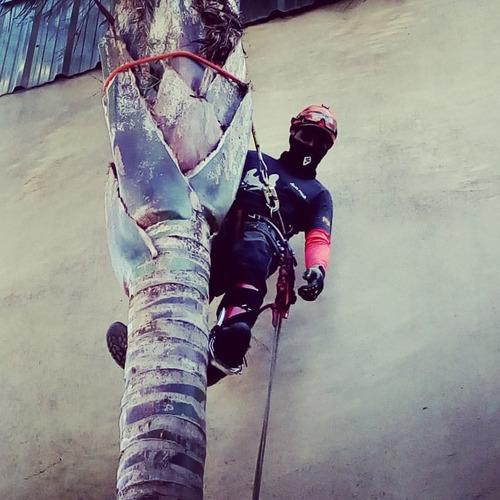 poda de arboles y palmeras tala extracciones altura riesgo