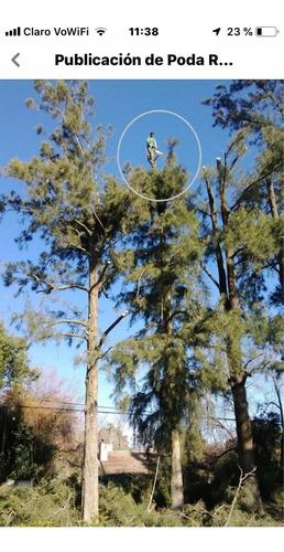 poda de árboles ,zona oeste, norte ,extracciónes,art