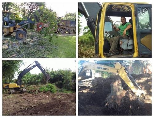 poda de arboles,altura,riesgo,desmonte, extracción de raíces