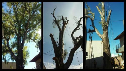 poda de arboles,altura,riesgo,desmonte y extraccion d raíces
