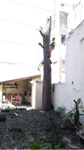 poda de árboles,personal asegurado allianz