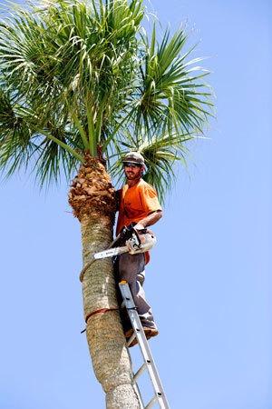 poda de árvores / remoção/ limpeza de coqueiros