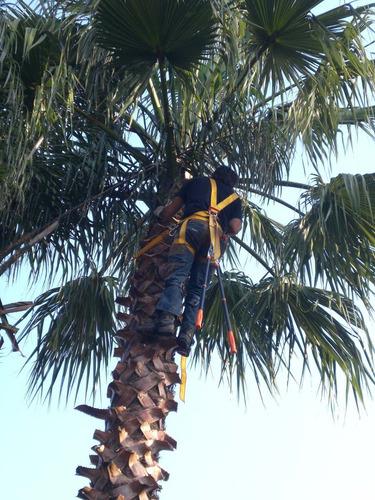 poda de palmeras, árboles, tala, podas de riesgo, altura.