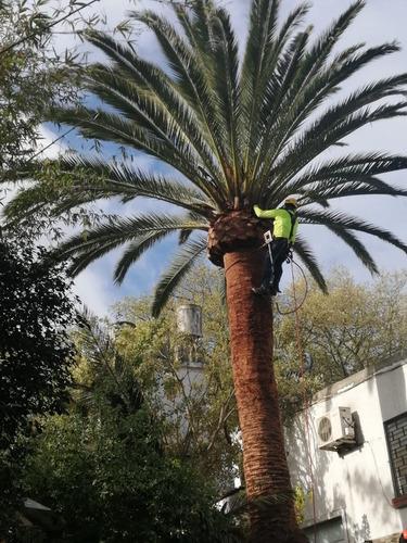 poda de palmeras y arboles