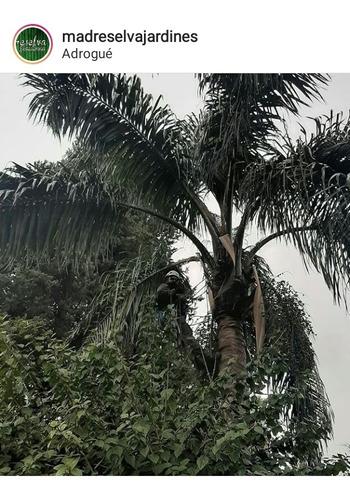 poda en altura / limpieza de palmeras \ extraccion