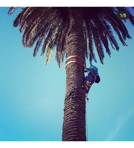 poda en altura, limpieza de palmeras, extracciones de raíz