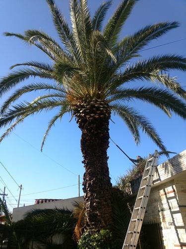 poda en altura, poda de enredaderas, palmeras, jardineria