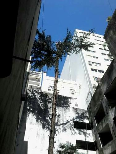 poda en altura,extracciones,talas,limpieza de palmeras