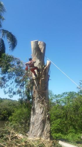 poda extracción transplante - arboles gran tamaño y palmeras