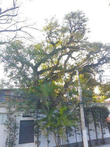 poda & remoções de árvores, laudo técnico e autorização d