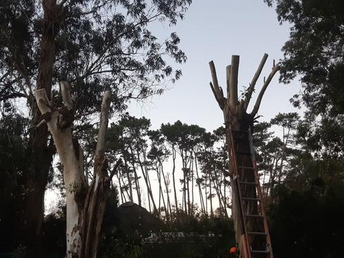 poda tala árboles