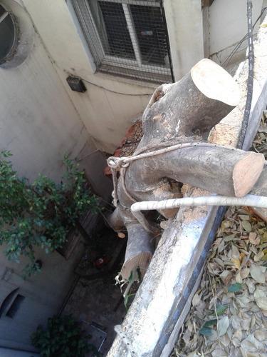 poda, tala/extracción de arboles y palmeras caba. bs as.