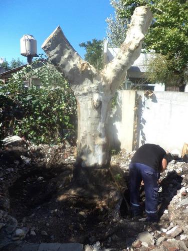 poda y desmonte de arboles de riesgo,extracciones de raíces.