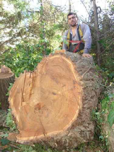 poda y extracción de árboles