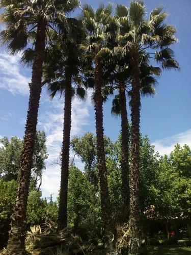 poda y mantenimiento de palmeras