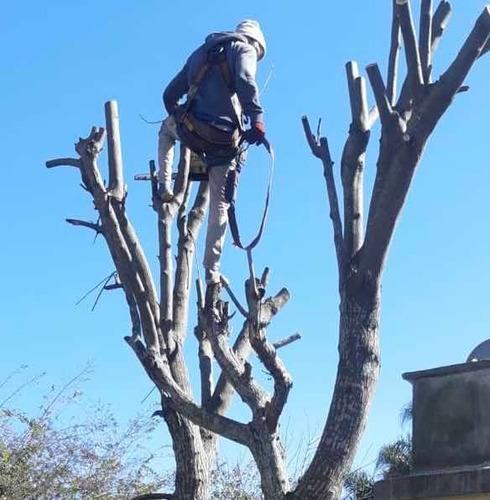 poda y tala de árboles.
